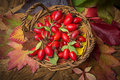 Basket with rose hips a fresh Stock Photography