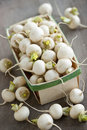 Basket of small turnips many white freshly picked in for sale on farmers market Royalty Free Stock Photography