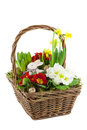 Basket with spring flowers Stock Photography