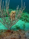 Basket Star and Sea Rod Stock Photos