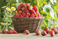 Basket with strawberries Royalty Free Stock Photo