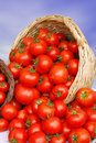 Basket with tomatoes Royalty Free Stock Photo