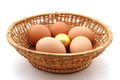 Basket with usual chicken egg and golden egg Stock Photos
