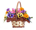 Basket of various flowers Stock Images