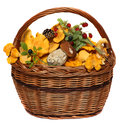 Basket with wild forest mushrooms and berries Royalty Free Stock Photo