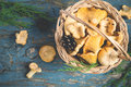Basket with wild mushrooms chanterelles on a blue background Royalty Free Stock Photo