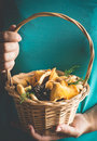 Basket with wild mushrooms chanterelles in female hands Royalty Free Stock Photo