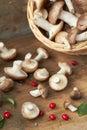 Basket of wild mushrooms Royalty Free Stock Photo