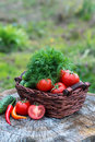 Basket and wooden plate with fresh vegetables (tomatoes, cucumbe Royalty Free Stock Photo