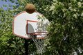 Basketball backboard sand blossoms of spring a is partially hidden from sight with the a canada red cherry tree Royalty Free Stock Photography
