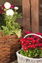 Baskets with different flowers Royalty Free Stock Photos