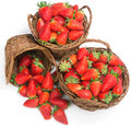 Baskets of fresh ripe strawberries Royalty Free Stock Photo