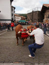 Basque rural sports - Idi probak (oxen tests) Stock Photography
