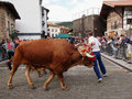 Basque rural sports - Idi probak (oxen tests) Royalty Free Stock Images