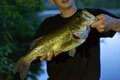 Bass Fishing Catch Royalty Free Stock Photo