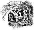 Basset in forest hunting dog hound breed black and white illustration Royalty Free Stock Photo
