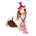 Basset hound on fourth of july a happy dog wearing a red white and blue american flag necktie and hat for the independence day Royalty Free Stock Photography