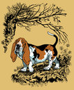 Basset illustration hunting dog hound breed graphic style Stock Image