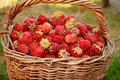 Bast basket with a strawberry Royalty Free Stock Photos