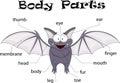 Bat body parts