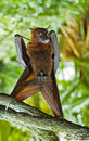 Bat-man Fotografia de Stock Royalty Free