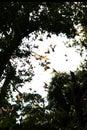 Bat migration kasanka national park zambia africa Royalty Free Stock Images