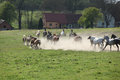 Batch of horses running away in the dust front ranch Royalty Free Stock Photos