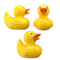 Bath ducks isolated yellow rubber on white clipping paths Stock Photos