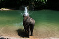 Bathing elephant endanger take a bath in a river in aceh sumatera indonesia Stock Photo