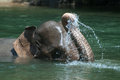 Bathing elephant endanger take a bath in a river in aceh sumatera indonesia Stock Images