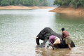 Bathing time for elephant in a lake with gadman Royalty Free Stock Photo