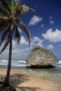 Bathsheba, Barbados Immagine Stock
