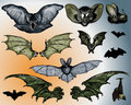 Bats and Flying Dog. Royalty Free Stock Image