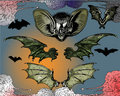 Bats and Flying Dog. Stock Image