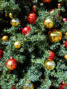 Baubles red and gold christmas on tree Stock Photography