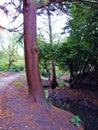 Baum zwischen weg und strom Stockfoto