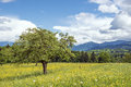 Bavaria landscape bavarian with tree meadow with many flowers and the alps Royalty Free Stock Photography