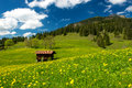 Bavarian alps in germany meadow the Royalty Free Stock Image