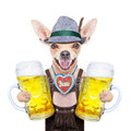 Bavarian beer dog Royalty Free Stock Photo