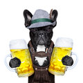 Bavarian dog Royalty Free Stock Photo
