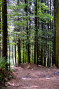 Bavarian forest an hiking trail in the german Stock Photos