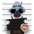 Bavarian oktoberfest mugshot dog with an empty blank banner and ginger bread heart from beer fest Stock Photo