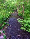 Baxters hollow state natural area stream flows through a dense woodland at in southern wisconsin Stock Photos