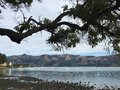 Bay in Akaroa Royalty Free Stock Photo