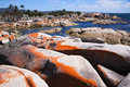 Bay of fires scenics scenic shot lichen orange boulders clear ocean water and vegetation tasmania australia Royalty Free Stock Photos