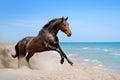 Bay horse along seashore Royalty Free Stock Photo