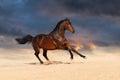 Bay Horse In Desert