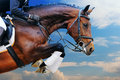 Bay horse in jumping show against blue sky Royalty Free Stock Photo