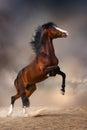 Bay horse rearing Royalty Free Stock Photo