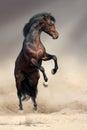 Bay horse rearing up Royalty Free Stock Photo